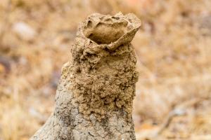 Lüftungsschlot eines Termitenhügels