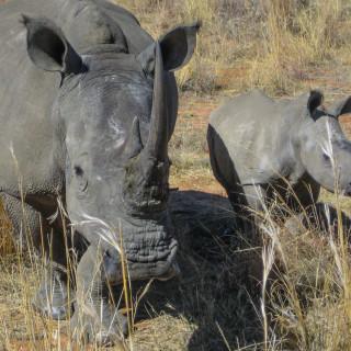 22.10. Elefantenreiten auf der Shambala Lodge