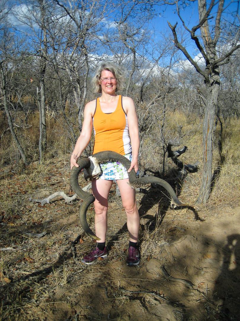Kudu-Geweih, ziemlich groß