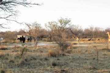 Ant's Hill - Pferde, Giraffen, Antilopen