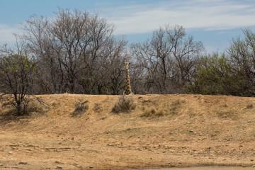 Ant's Hill - und Giraffe auf der VIP-Tribüne