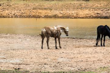 Ant's Hill - Schwimmen mit den Pferden
