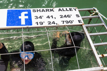 1.11. Kleinbaai - White Shark Cage Diving. Im Käfig.