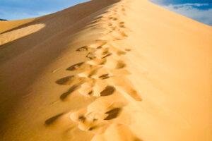 6.7.2008: Coral Pink Sand Dunes: Licht Wind, Sand, Rumtollen ...