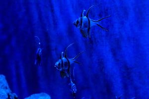8.4.2012: Bristol Aquarium