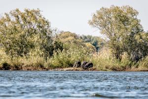 15.7. Zambezi Kayak Tour, Hippos