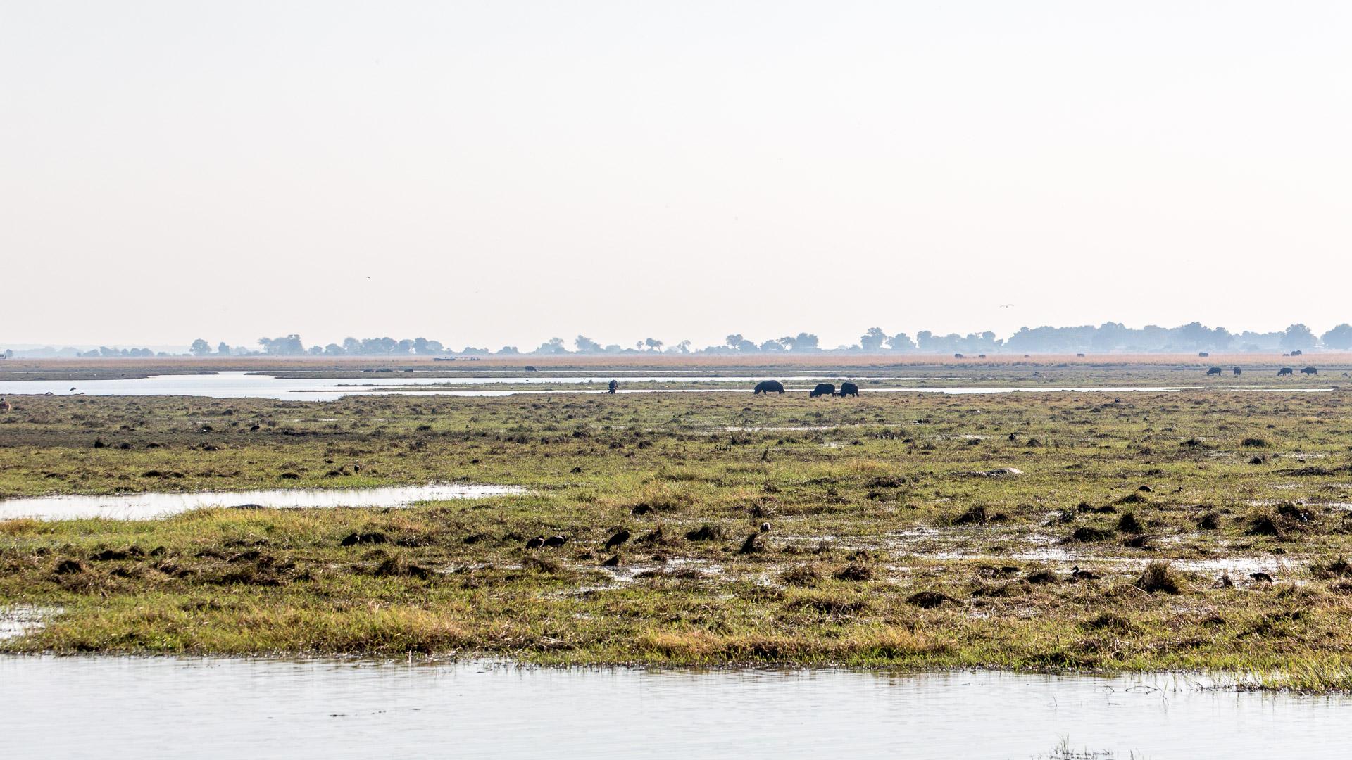16.7. Chobe River Sunset Tour - Büffel und Hippo