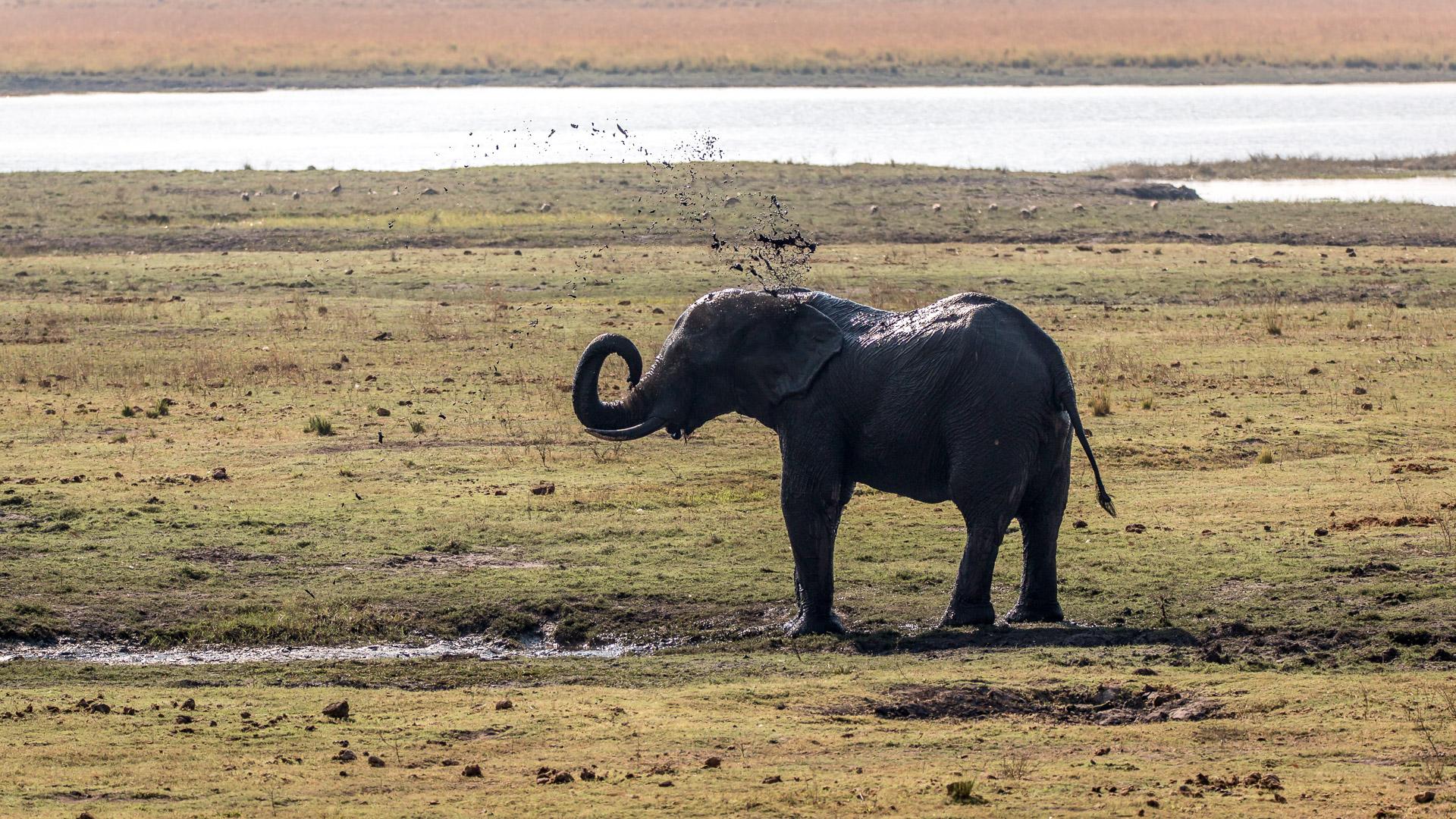 17./18.7. Chobe NP, River Drive nach Ihaha - Elefant