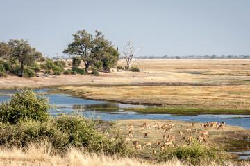 17./18.7. Chobe NP, River Drive, Ihaha->Ngoma