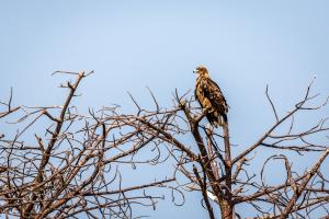 17./18.7. Chobe NP, River Drive, Ihaha->Ngoma - Steppenadler