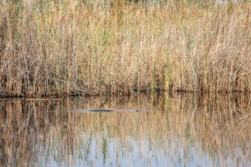 19./20.7. Bwabwata NP, Nambwa Camp - Krokodil, kein Baden :-(