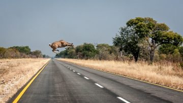 20.7.: Nambwa --> Divundu. Ein Kudu kreuzt!