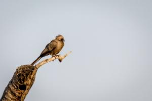 22.7. Sunrise Tour auf dem Kavango - Go-away-Bird