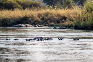 22.7. Sunrise Tour auf dem Kavango - Hippos