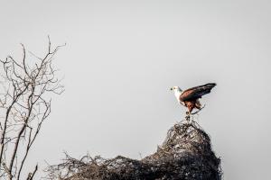 22.7. Sunrise Tour auf dem Kavango - African Fish Eagle