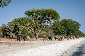 24.7. Rundu --> Roy's Restcamp