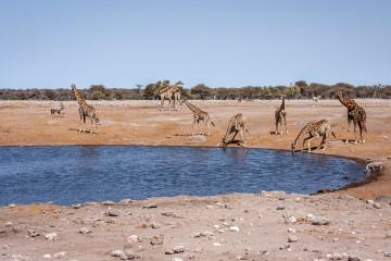 26.7. Chudob Waterhole - Giraffen, Oryx, Warthog
