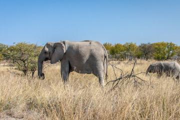 26.7. Okerfontein - Elefanten