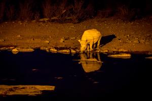 26.7. Moringa Waterhole, Halali - Nashorn