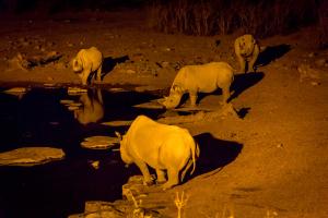 26.7. Moringa Waterhole, Halali - Nashörner