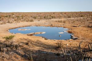 "27.7. Moringa Waterhole, Halali - ohne ""Verkehr"""