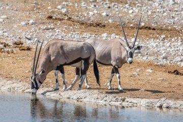 27.7. Olifantsbad - Oryx