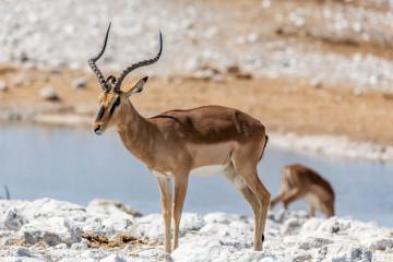 27.7. Olifantsbad - Impala