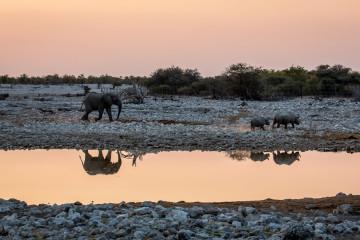 27.7. Okaukuejo Waterhole - Elefant jagt Nashörner (17:21 Uhr)