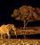 Afrika 2015: Etosha