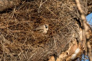 28.7. Okaukuejo Waterhole - Webervogel