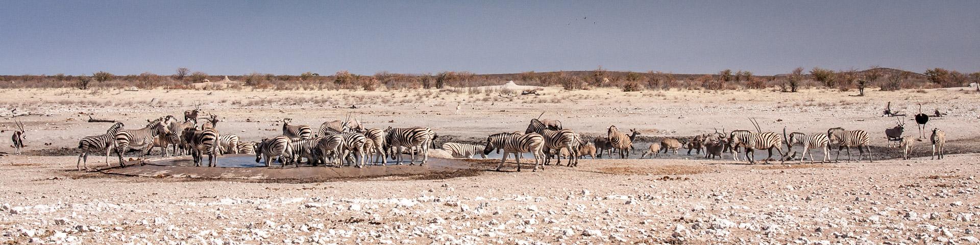 30.7. Renostervlei - Bergzebras und Zebras