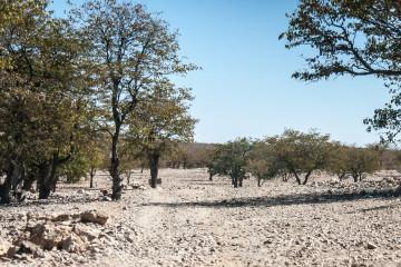 31.7. Trail zum Himba-Dorf