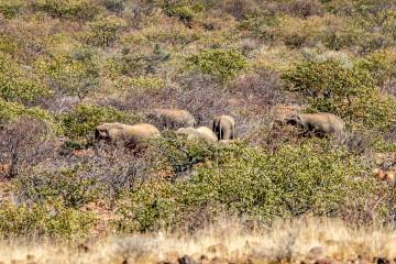 1.8.: Hoada --> Ugab Terraces; Wüstenelefanten