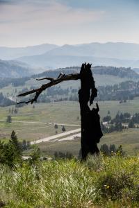 18.7. Lost Lake Trail - Burned Tree