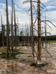 21.7. Lower Geyser Basin