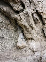 30.7. Fossil Trail
