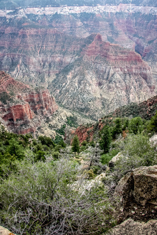 Grand Canyon: Roaring Springs Canyon