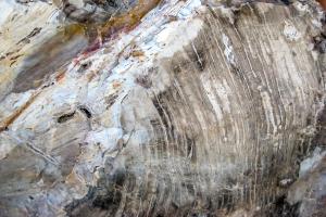 8.7. Versteinerte Baumstämme im Escalante State Park.
