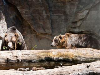 17.-20.7. Denver: Denver Zoo