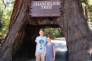 15.7. Chandelier Drive Thru Tree