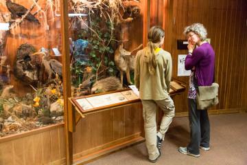 15.-17.7. Humboldt Redwoods SP - Visitor Center