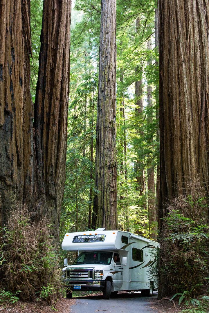 15.-17.7. Humboldt Redwoods SP