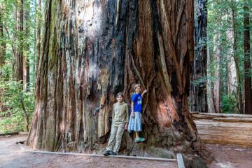 15.-17.7. Humboldt Redwoods SP - Giant Tree