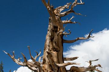 23.-25.7. Great Basin NP - Bristlecone Pines