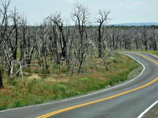 Mesa Verde: Waldbrand aus dem Jahre 2005