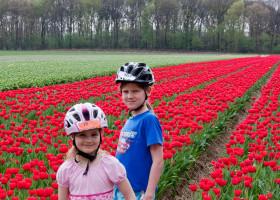 Dann geht's über die Grenze. Tulpen ...