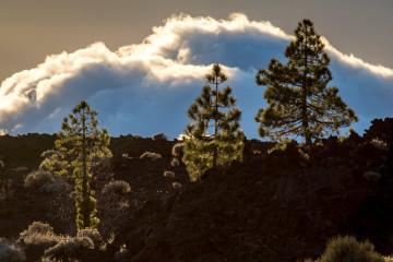 14.11. Corona Forestal / Lava Negra