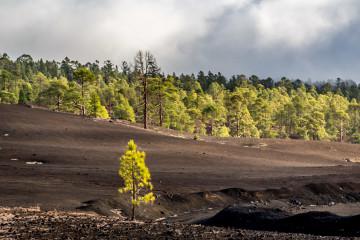 14.11. Corona Forestal, Teide