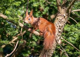 18.4. Wildlife im Garten ;-)