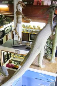 30.7.: Dinosaur Museum in Lyme Regis